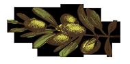 olive-branch-left-large