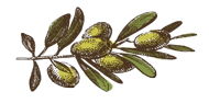 olive-branch-right-large